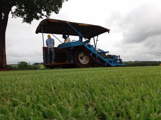 fornecedor de grama para campo de futebol Araçatuba