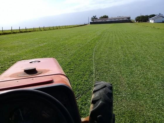 onde encontro fornecedor de grama em campo São Luís