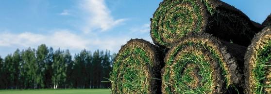 Comprar Rolo de Grama para Decoração Goiânia - Rolo de Grama Natural para Campo