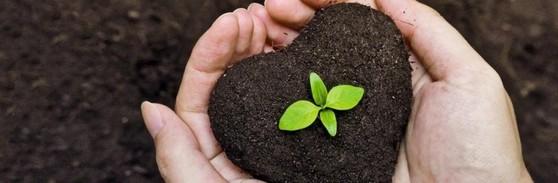 Cotar Terra Adubada e Terra Vegetal São Carlos - Terra Adubada 5kg