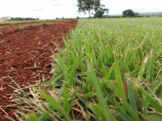 Fornecedor de Grama em Campo Goiânia - Fornecedor de Grama Natural de Qualidade