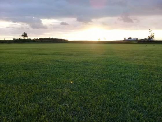 Fornecedor de Grama Natural de Qualidade Bauru - Fornecedor de Grama Natural para Campo