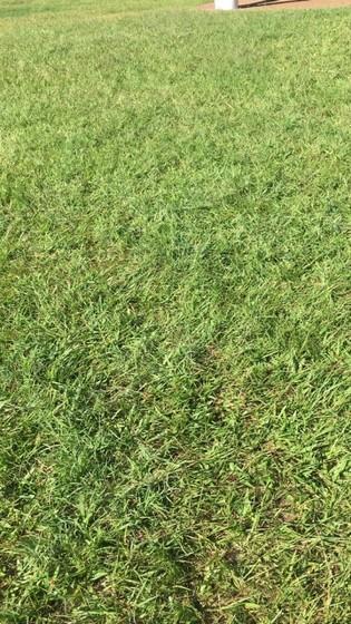 Grama Batatais para Campo de Futebol Valores Itatiba - Grama Batatais para Jardim