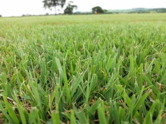 Grama Campo Verde á Venda Goiânia - Grama de Campo Grande de Qualidade