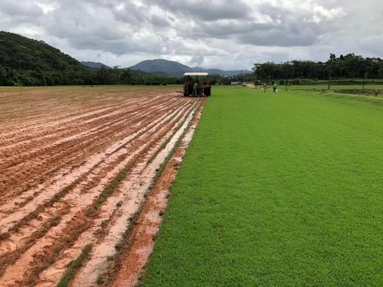 Onde Encontro Fornecedor de Grama Natural para Campo Presidente Prudente - Fornecedor de Grama Natural de Qualidade