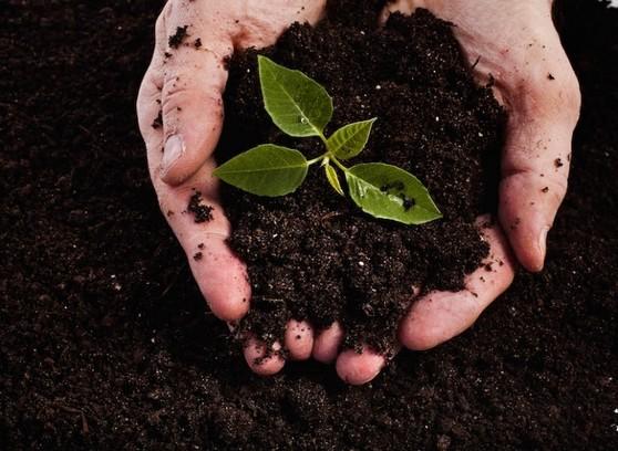 Orçar Terra Adubada para Jardim Araçatuba - Terra Adubada 20kg