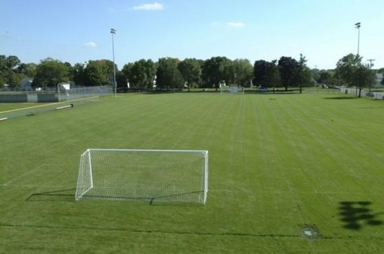 Quanto Custa Grama para Campo de Futebol Franca - Grama para Campo por Metro Quadrado