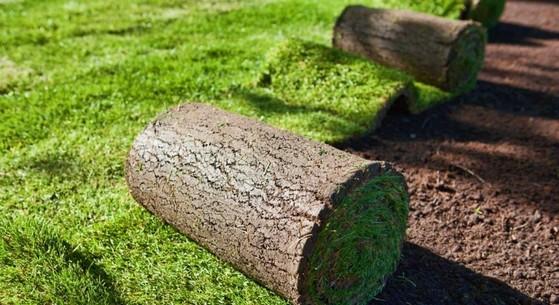 Rolo de Grama Natural para Campo Hortolândia - Rolo de Grama Natural para Campo