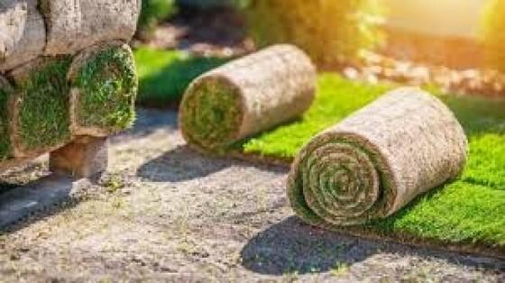 Rolo de Grama para Decoração Vitória - Rolo de Grama Natural para Campo