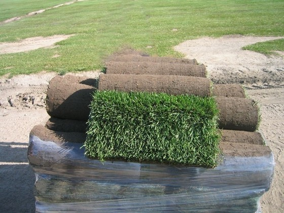 Rolo de Grama para Jardim Limeira - Rolo de Grama