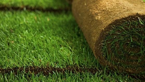 Rolos de Grama Natural para Campo Hortolândia - Rolo Tapete de Grama Natural