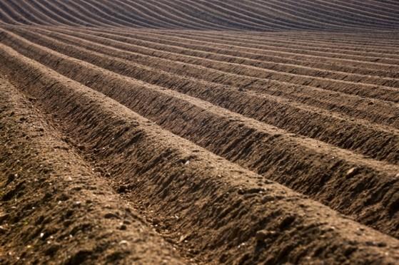 Terra Adubada Orgânica Indaiatuba - Terra Adubada para Horta