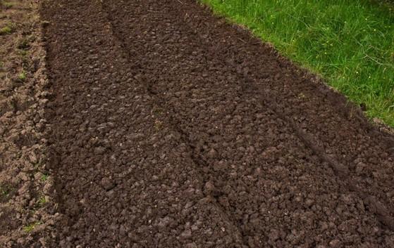 Terra Adubada para Jardim Melhor Preço Fortaleza - Terra Adubada para Horta