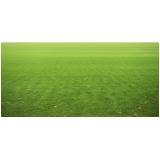 calcário para grama esmeralda
