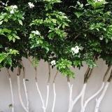 calcário para plantas