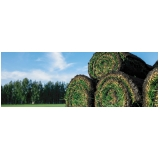 comprar rolo de grama para decoração Boa Vista