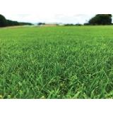 distribuidor de grama bermuda para campo de futebol Campo Grande