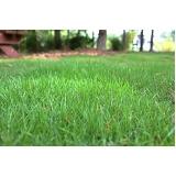 distribuidora de grama esmeralda folha fina