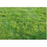 distribuidora de grama esmeralda para paisagismo