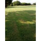 fornecedor de grama natural para campo Atibaia