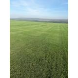 fornecedor de grama em campo de golf