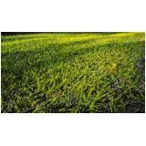 grama batatais para jardim Mendonça