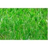 grama batatais placa Valinhos