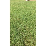 grama batatais valor Sorocaba