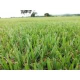 grama campo verde á venda Jacareí