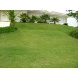 grama esmeralda de qualidade para jardim orçamento Atibaia