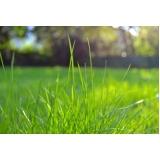 grama esmeralda folha fina orçamento Marapoama