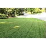 grama esmeralda para jardim orçamento Atibaia