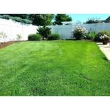 grama esmeralda para jardim Araçatuba