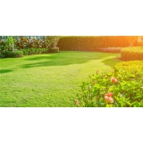 grama esmeralda para paisagismo Belo Horizonte