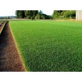 grama natural bermuda Araçatuba