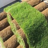 grama natural em rolo preço Brasília