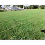grama natural para campo de futebol preço Rio Claro