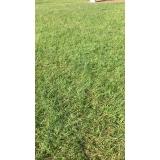 grama batatais para jardim com qualidade