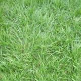 grama batatais placa