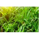 gramas esmeraldas folhas finas Votuporanga