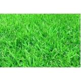 grama esmeralda barata