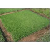grama esmeralda metro quadrado