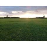 grama campo verde