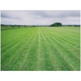 grama de campo grande