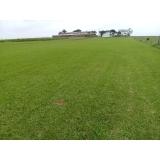 instalação de grama em sítio