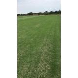 instalação de grama natural para campo valores Vitória