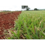 onde comprar grama esmeralda para campo Ribeirão Preto