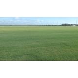 onde encontro distribuidor de grama bermuda para sombra Recife