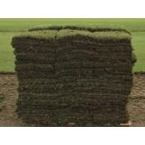onde encontro distribuidor de grama bermuda tapete Araras