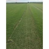 onde encontro fornecedor de grama em campo de golf Araçatuba